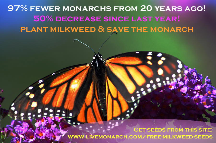 Plant Milkweed and Help to Save the Monarch.  Click the Image to Get your Free Seeds!