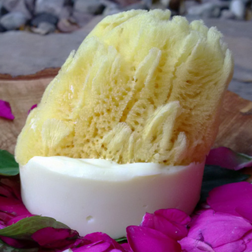 Natural Sea Sponge Imbedded in Omtoria's Bastile Soaps