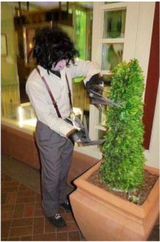 Edward Scissorhands trims the Carribou hedges