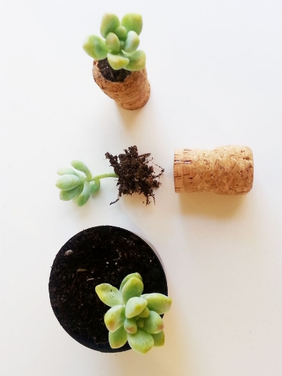 5_cork_planter_diy_tutorial_craft.jpg