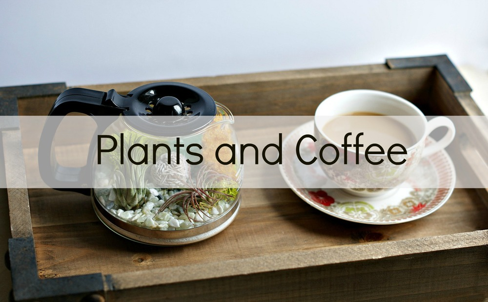 Plants and Coffee by A Charming Project