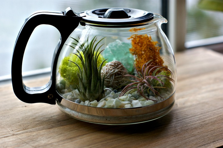 Plants and Coffee // Let's make a coffee pot Terrarium!