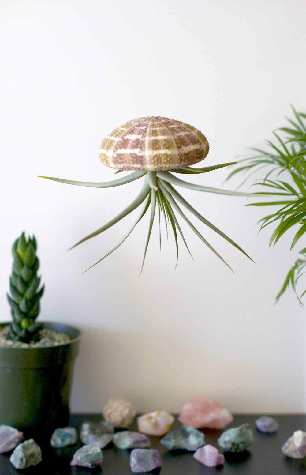 urban jelly fish hanging air plant home decor supplies 3