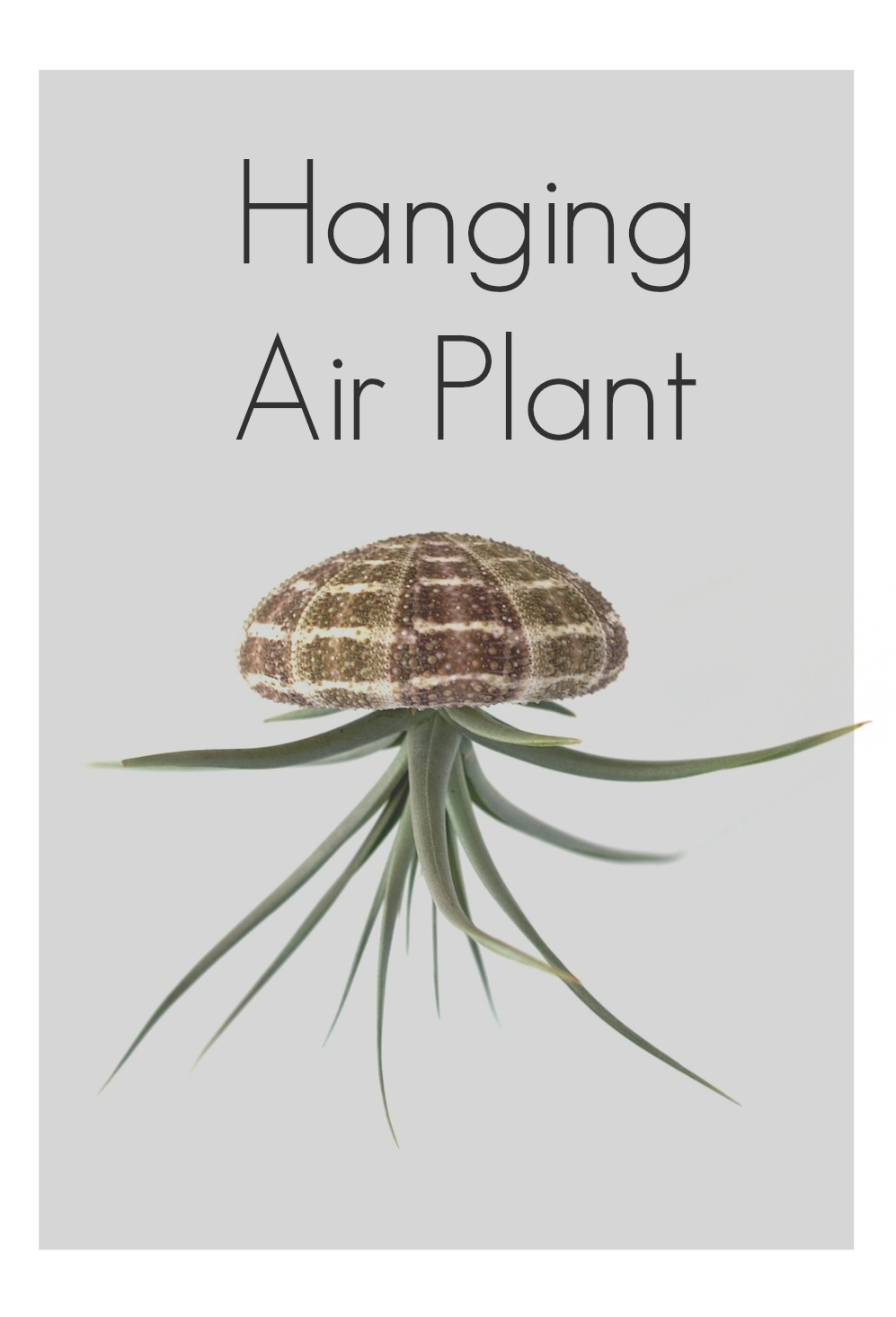 easy gardening hanging air plant home decor
