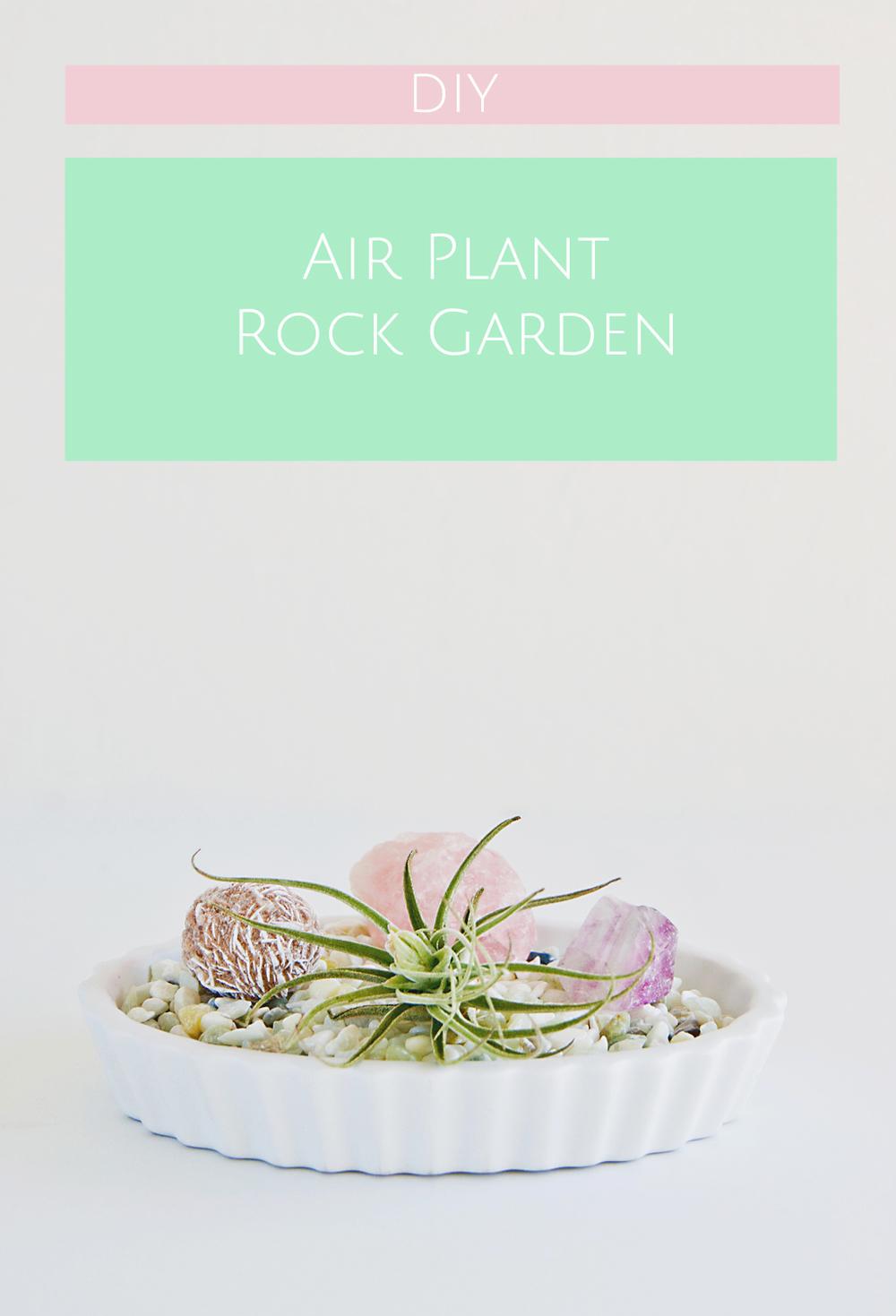 DIY Air Plant Rock Garden