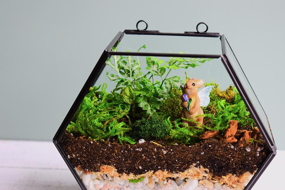 Geometric Silver Leaf Fern Terrarium via A Charming Project