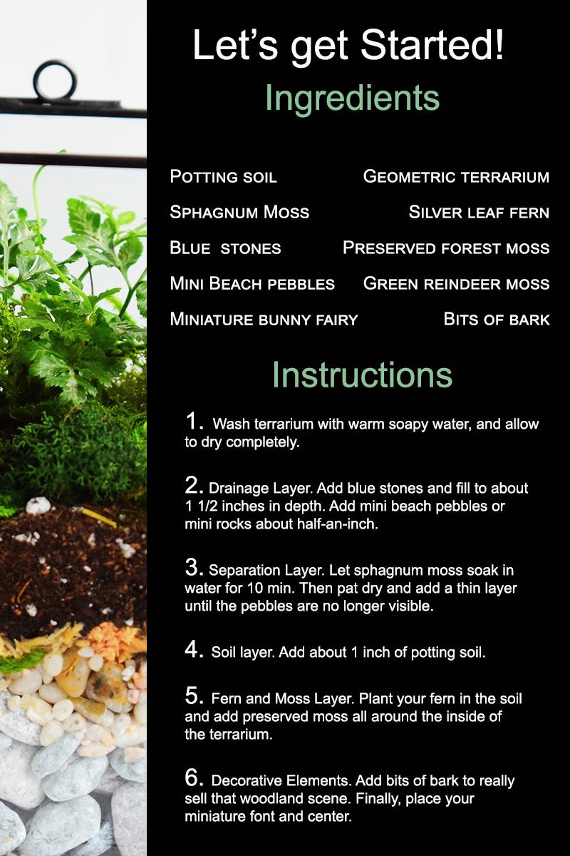 Geometric Silver Leaf Fern Terrarium Instructions