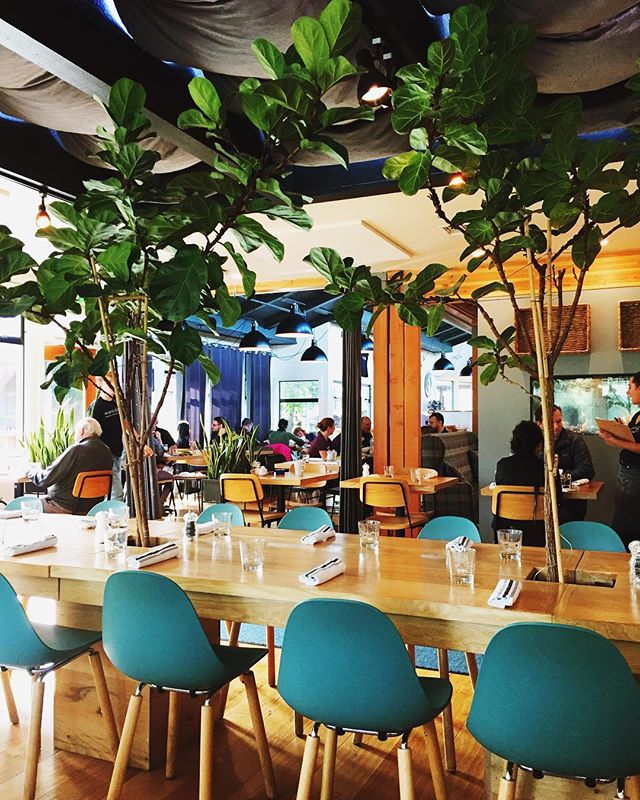Fiddle leaf fig trees for the win! Love it when restaurants bring the outdoors in! This literally took my breath away when I walked in. #goals #plantmom #fiddleleaffig #plantsofinstagram #urbanjinglevibes #urbanjungleblogger