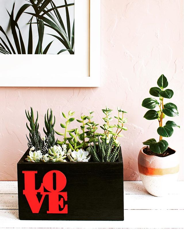 Love is in the air and Valentine's Day is right around the corner. Plant your own mini wood box succulent garden as a gift or for a brightly lit window in your space! Inspiration and DIY on the blog today! . . . . . . . #succulentsofinstagram #urbanjunglebloggers #apartmentliving #plantgang #apartmenttherapy #bhghome #cactusmagazine #livingwithplants
