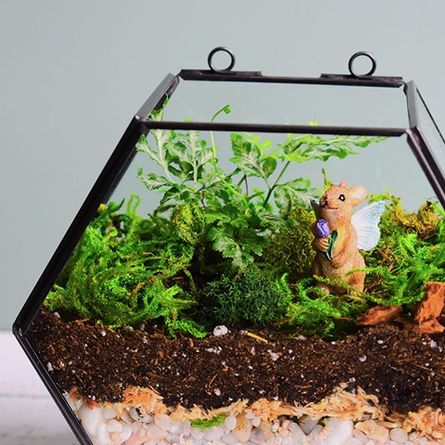 Make this easy geometric terrarium in under 30 minutes. Use live ferns, preserved moss or both! Geometric glass terrarium and supplies from @michaelsstores * Step 1: Wash glass terrarium. Wash with warm soapy water and set aside to let dry. *  Step 2: The drainage layer. Add blue stones and fill to about 1/ 1/2 inches in depth. Then add mini beach pebbles or small rocks (about half and inch deep). * Step 3: Separation Layer. Let sphagnum moss soak in water for about 10 min. Then pat dry and then add a thin layer over the rocks. * Step 4: Soil layer. Add about 1 inch of potting soil. * Step 5: Greenery: Plant your silver leaf fern in the soil and add preserved moss all around the inside of the terrarium. * Step 6: Decorative Elements. Add bits of bark to really sell the woodland scene. Finally place your miniature fairy front and center. * Terrarium Care: Water your fern with a couple ounces of water every few days. Do not let the soil around the fern dry out completely. Keep near bright light but well away from a hot window.  Once a month trim away any dried leaves to allow for more growth. * * *  #plantlife #urbanjunglebloggers #plantaddict #plantsmakepeoplehappy #ferns #plantmom #crazyplantlady #terrarium #apartmentliving #bhghome #plantsofinstagram #michaelsmakers #terrariums