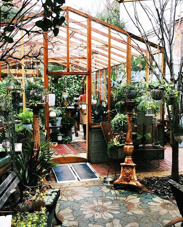 Walked in the rain and found the most unexpected garden in the heart of Oakland! Urban jungle vibes for sure! People were lined up to buy bouquets from the lovely florist 💐 . . . . . . . . #urbanjungle #urbanjungleblogger #houseplantsofinstagram #gardening #plantsmakepeoplehappy #plantshop