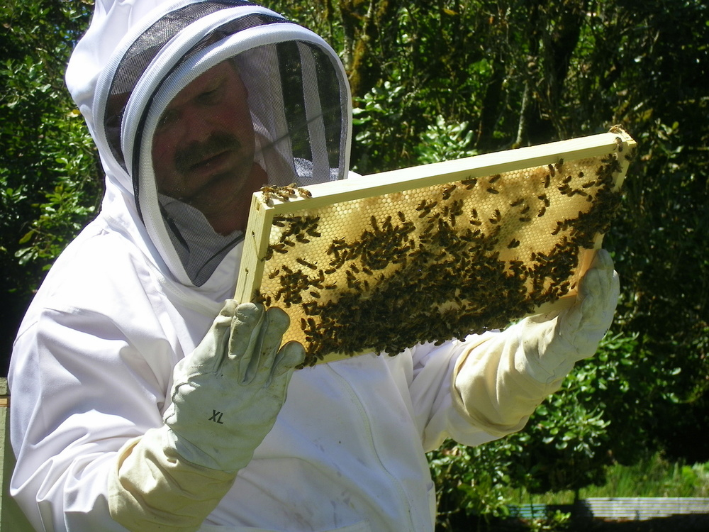 Jim, checking on the bees.
