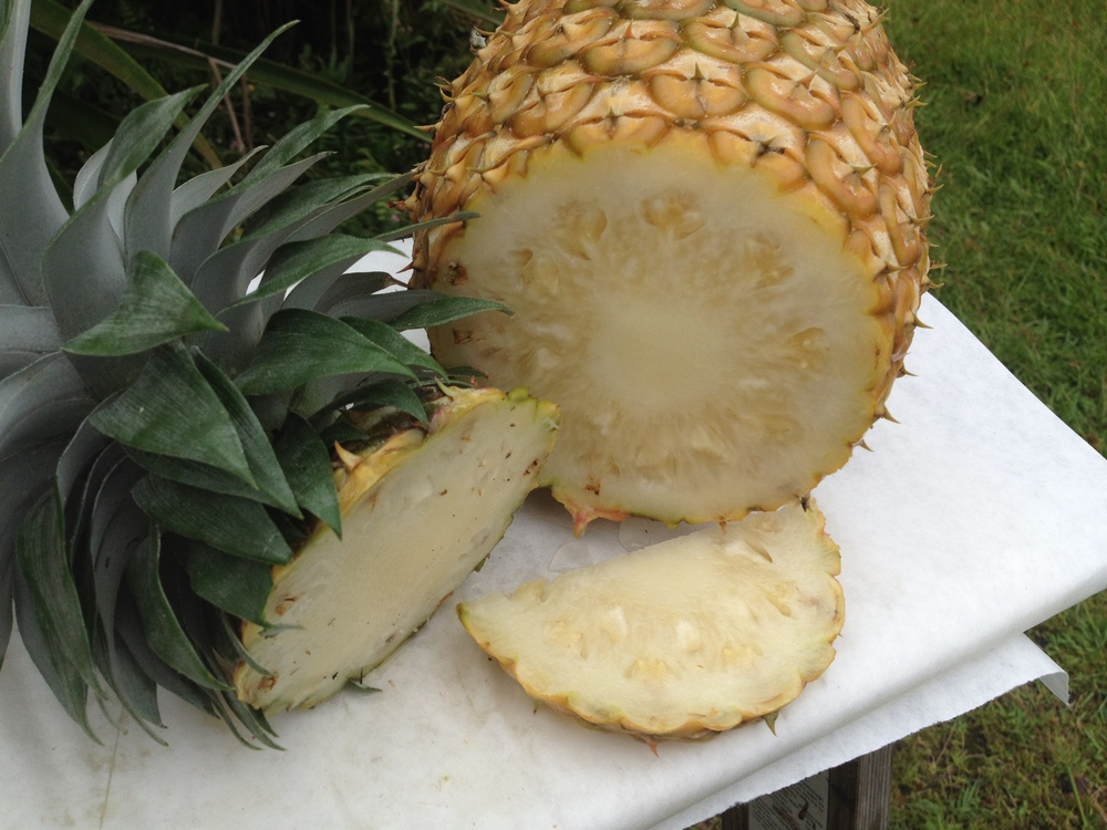 The inside of a white pineapple. Yum!