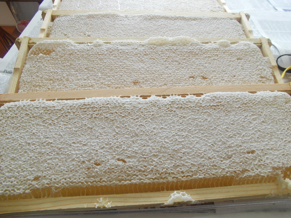 Beautiful capped honey - nice white virgin wax!