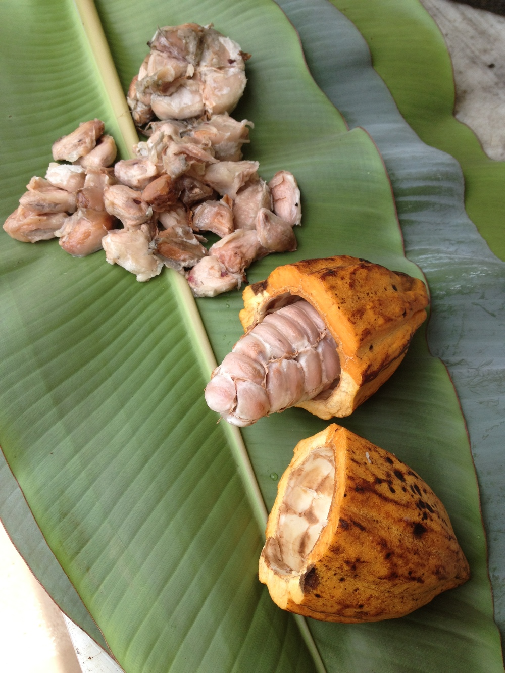 Cocoa Pods, opened and ready to wrap in banana leaves.