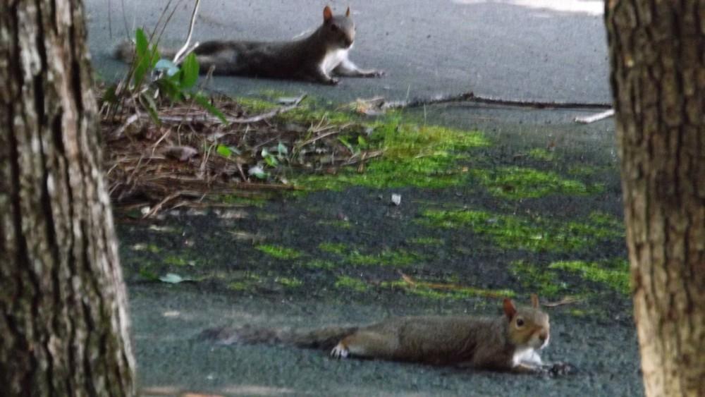 twosquirrels.jpg