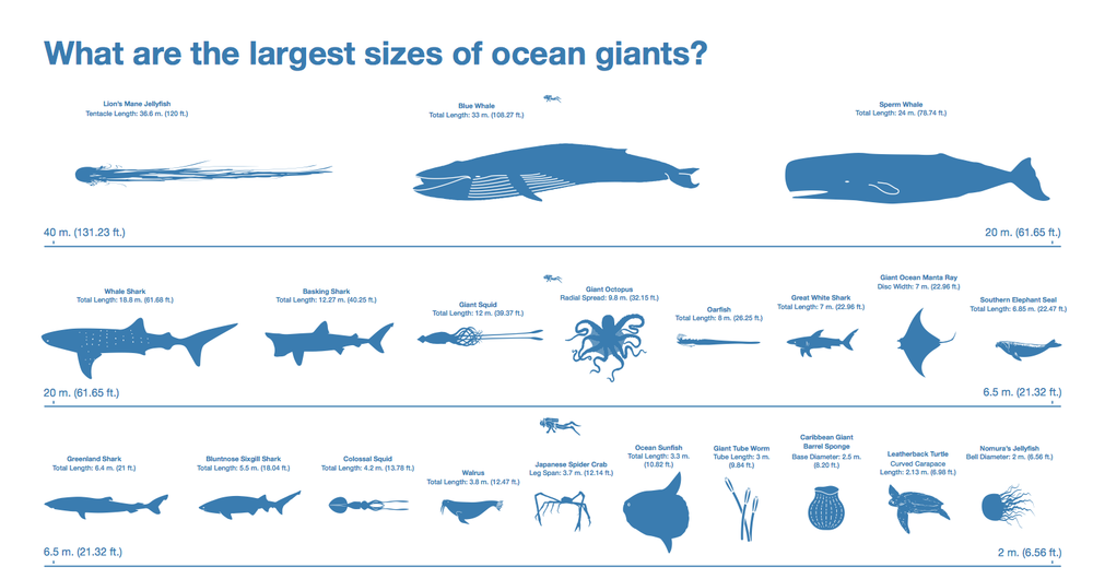 infographic ocean giants