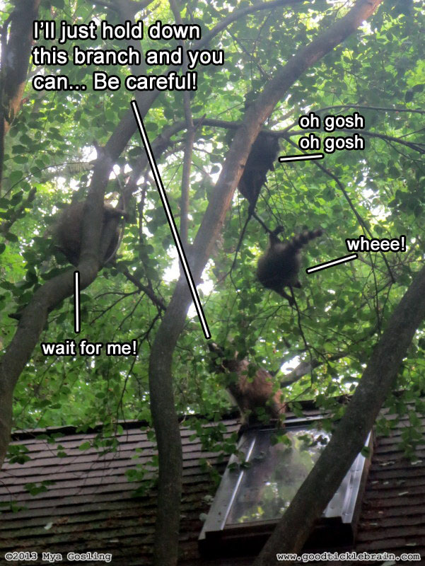 raccoon08.jpg