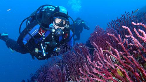 dalmacija-v-07.jpg