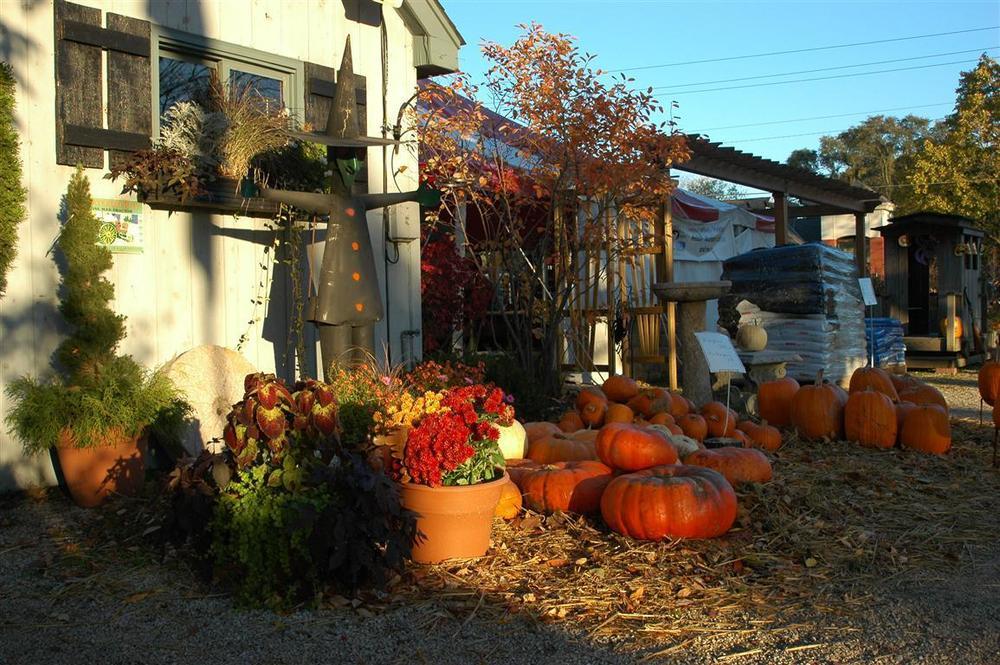 fall 3 (medium).jpg