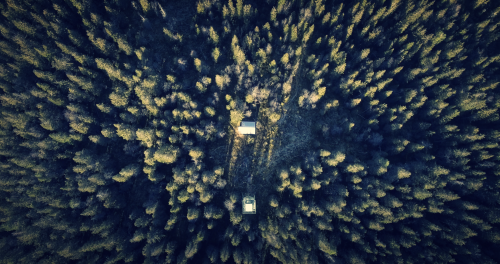 Drone photo forest