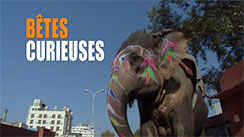 Bêtes Curieuses(Series, 2014) Red Letter Films Colour Correction