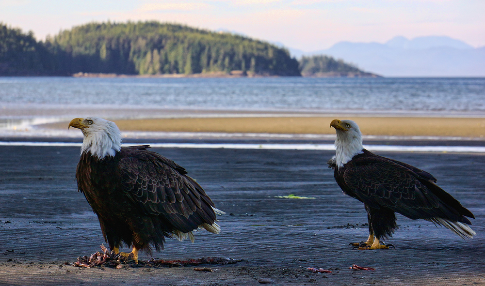 Port Hardy Eagles