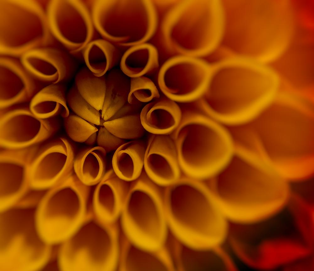 Blossom-9070051.jpg