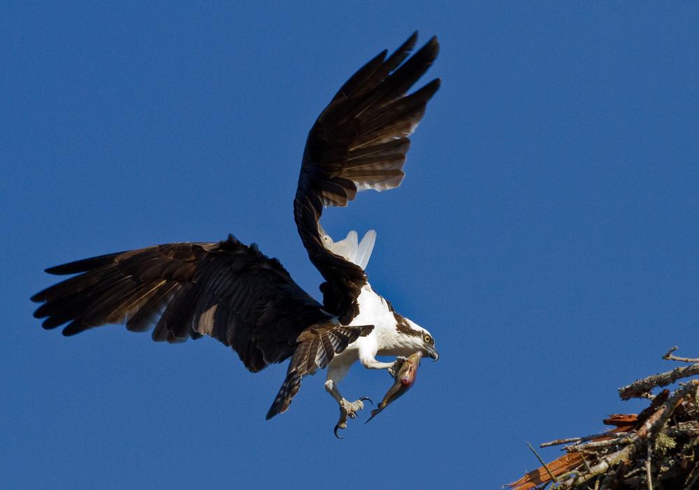 Osprey-5-X3.jpg