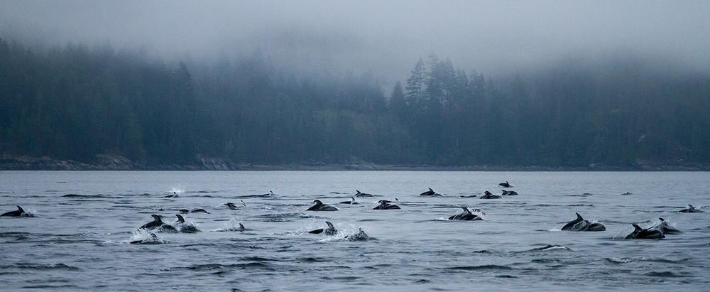 Dolphins-0433.jpg