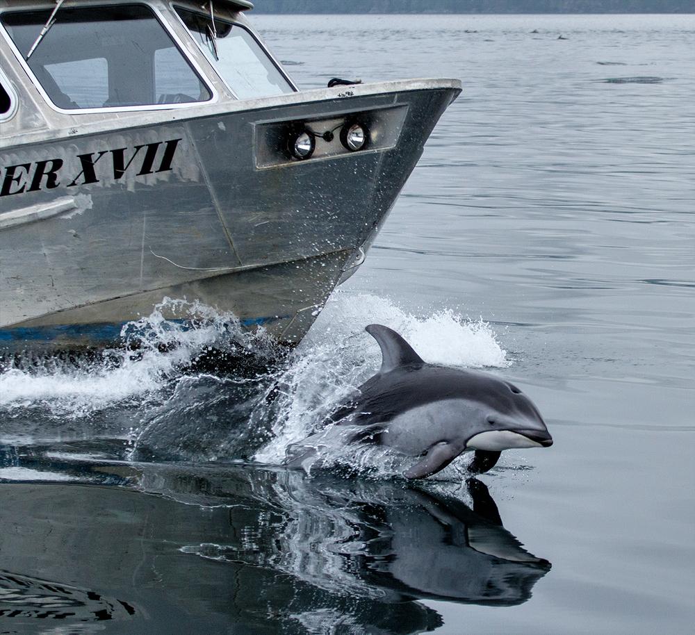 Dolphins-0512.jpg