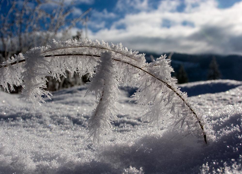 Frost Bridge