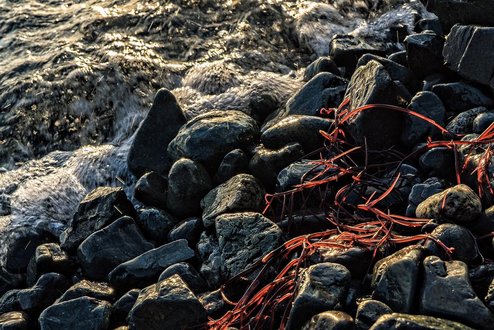 Neck Point Seaweed.jpg