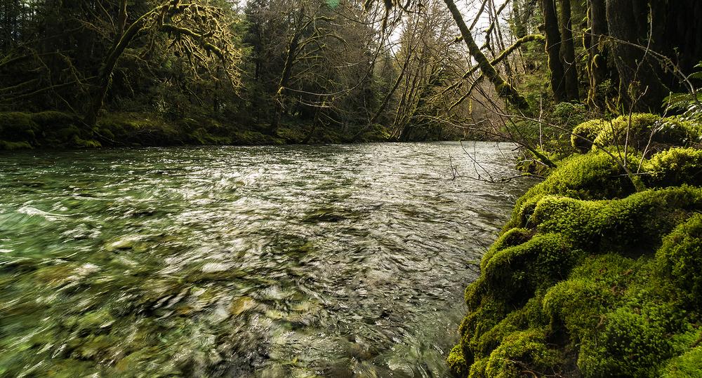 Lake Cowichan Creek.jpg