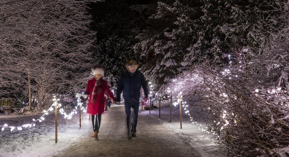 Christmas At Milner Gardens