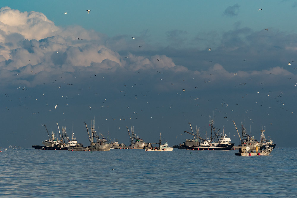 The Herring Fleet in Parksville Bay at dawn