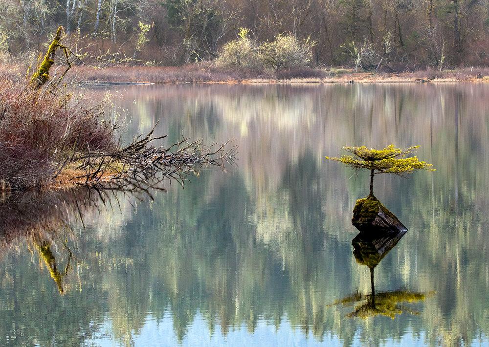 The Famous Fairy Lake Tree