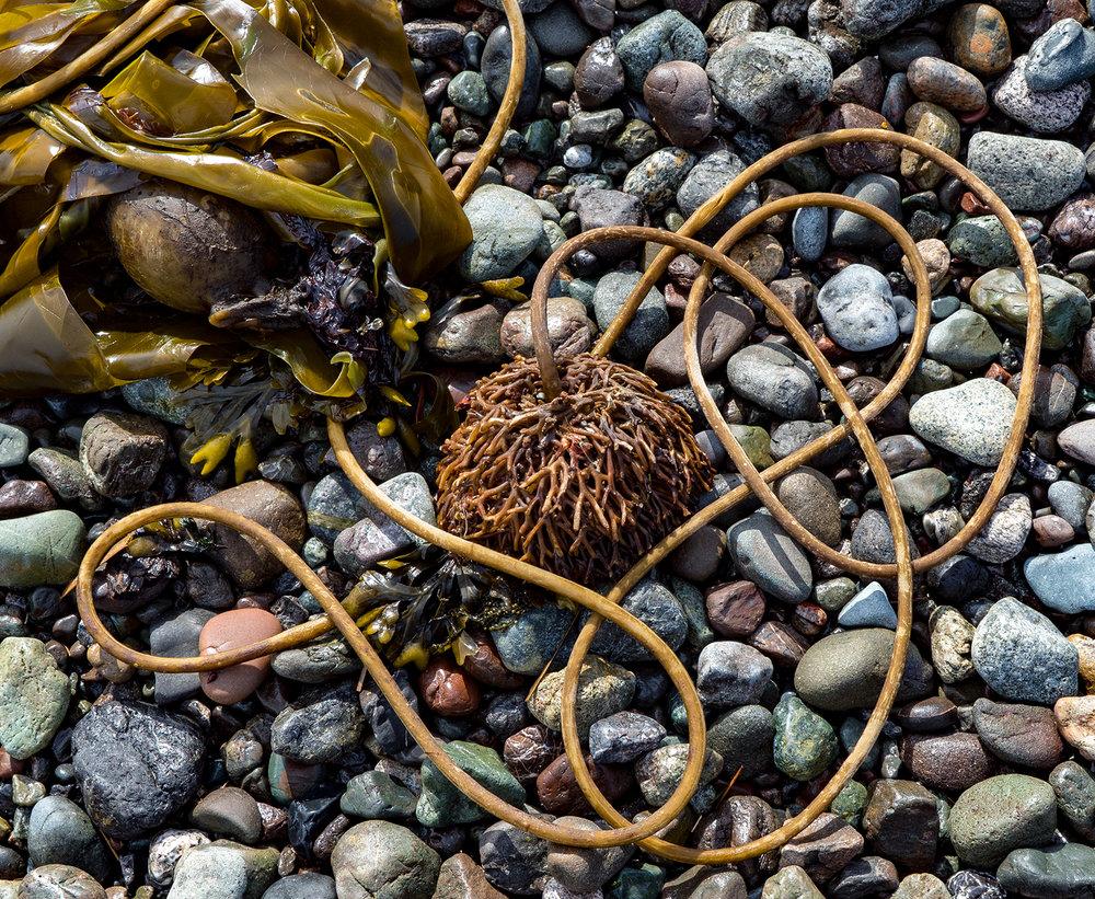 Seaweed Art On A Pender Island Beach
