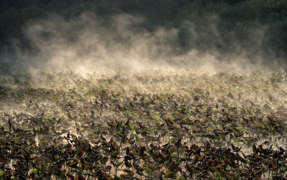 Quamichan Mist.jpg