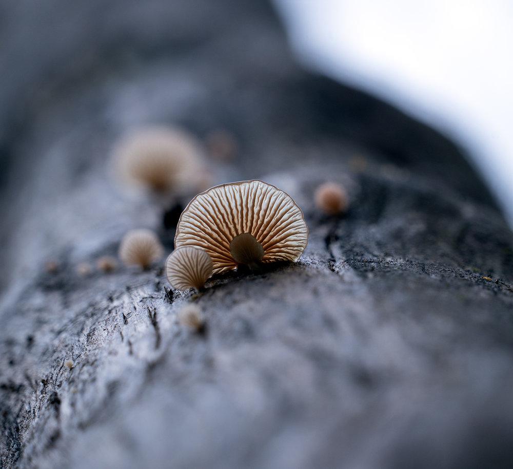Gordon River Fungi.jpg