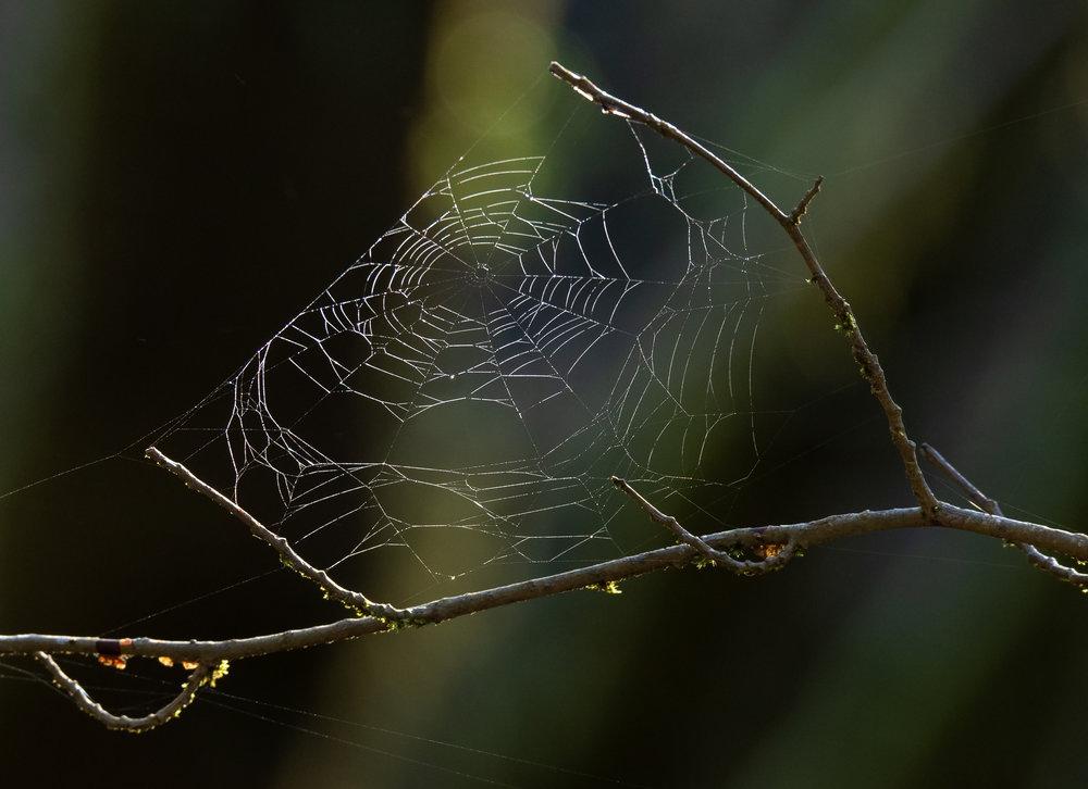 Gordon River Web.jpg