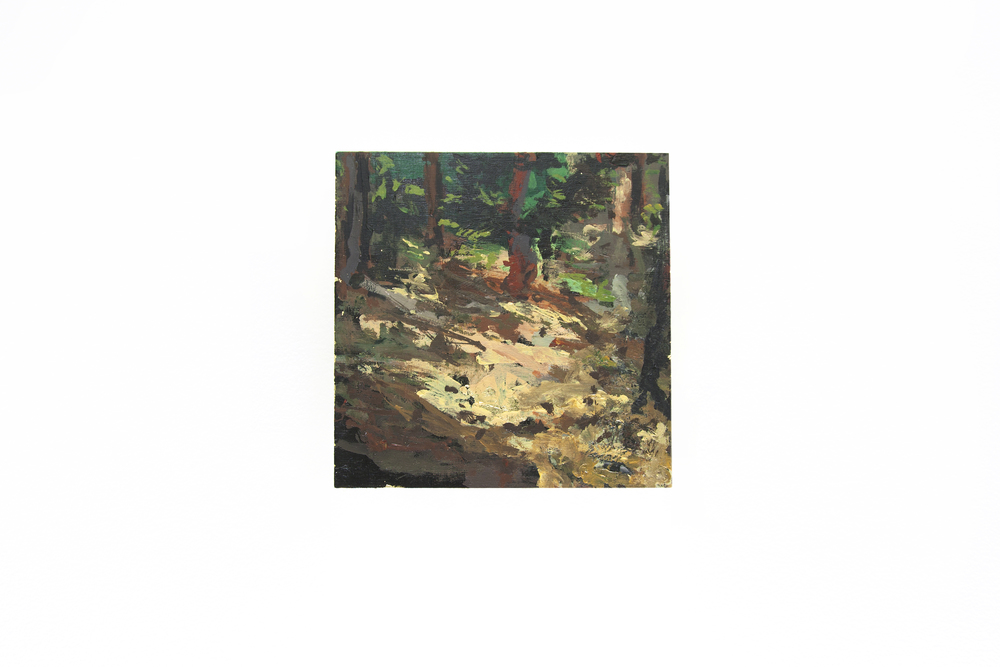 Dewitt's Forest