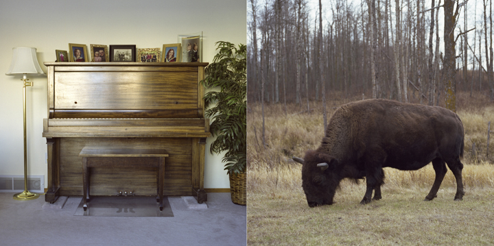 Piano_Bison_web.jpg