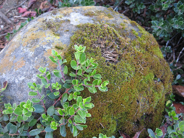 moss rock.jpg