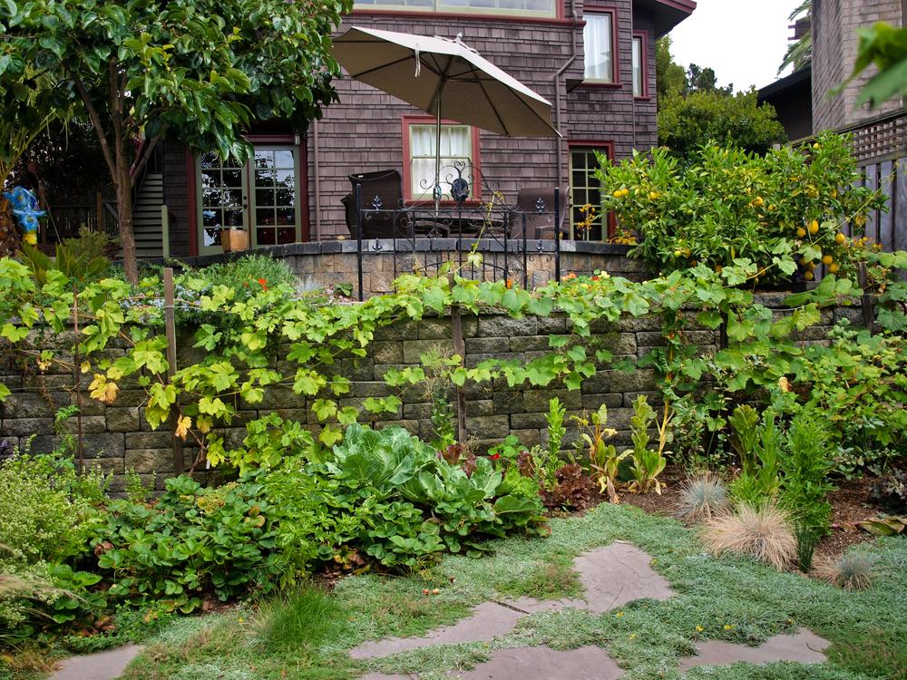 Edible Garden Designs - Zandalus.Net