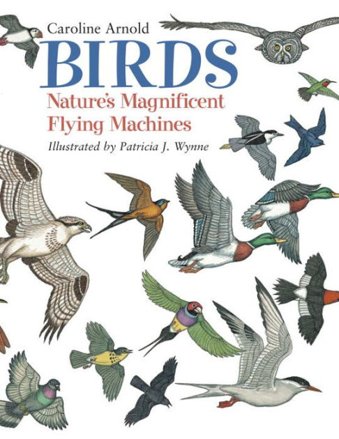 Birds: Natures Magnificent Flying Machines