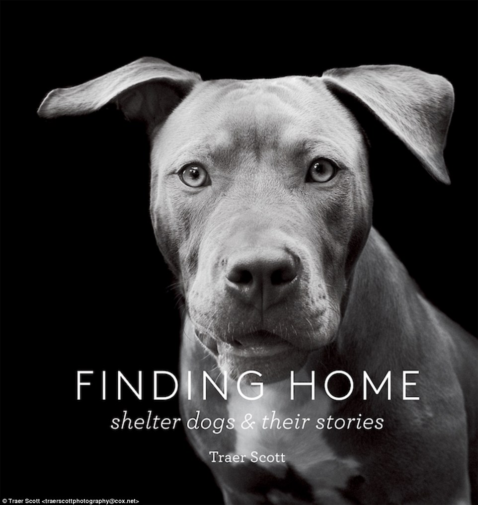 Finding Home shelter dogs and their stores traer scott bock.jpg