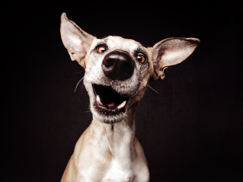 Nice Nosing You book Elke Vogelsang.jpg
