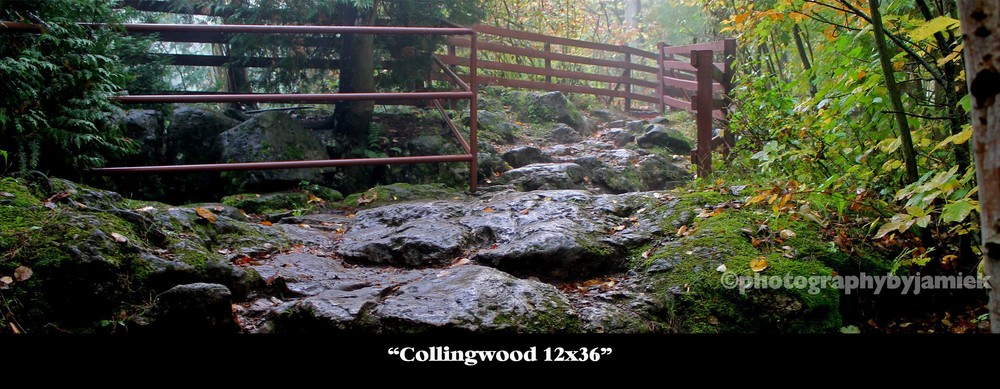 Collingwood 12x36.jpg