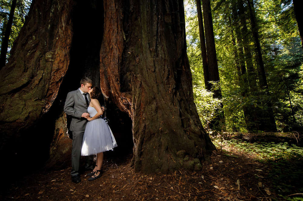 9602-d700_Katrina_and_Barry_Henry_Cowell_Redwoods_Felton_Wedding_Photography.jpg